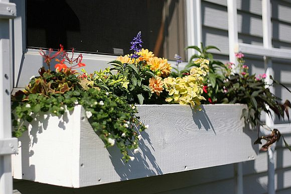 Build Your Own Window Boxes