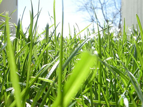 Grass Aeration Aerate Your Lawn For Better Growth