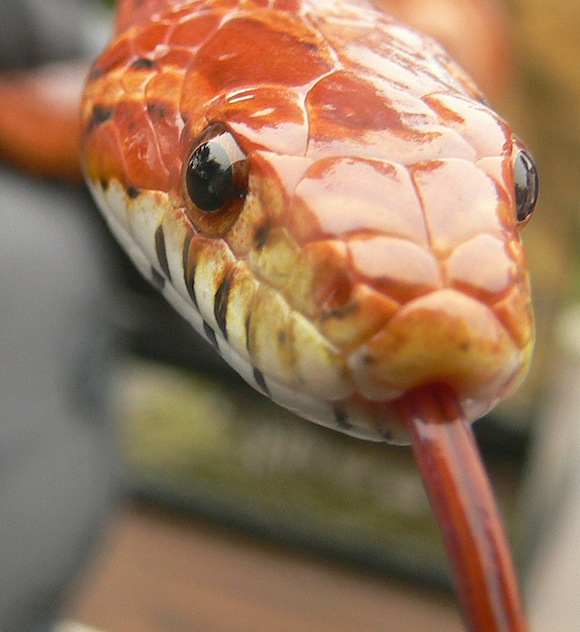 Snake The Creepiest Things Discovered In A New Home