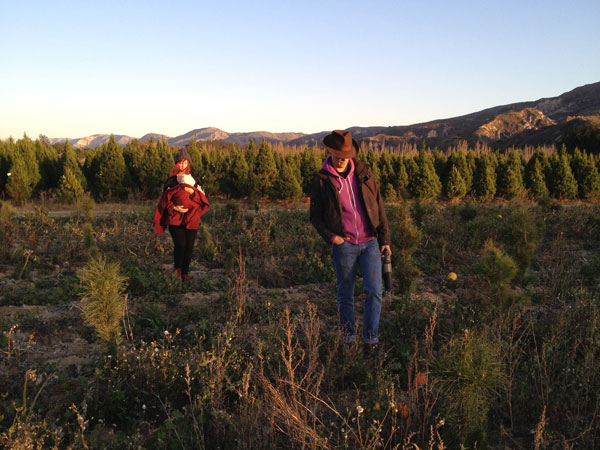 christmas tree farm How To Cut Your Own Christmas Tree
