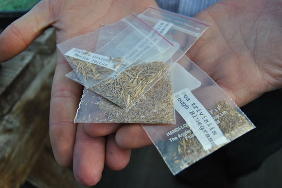 grass seed Seed For Yourself: A Visit to the Grass Seed Capital of the World