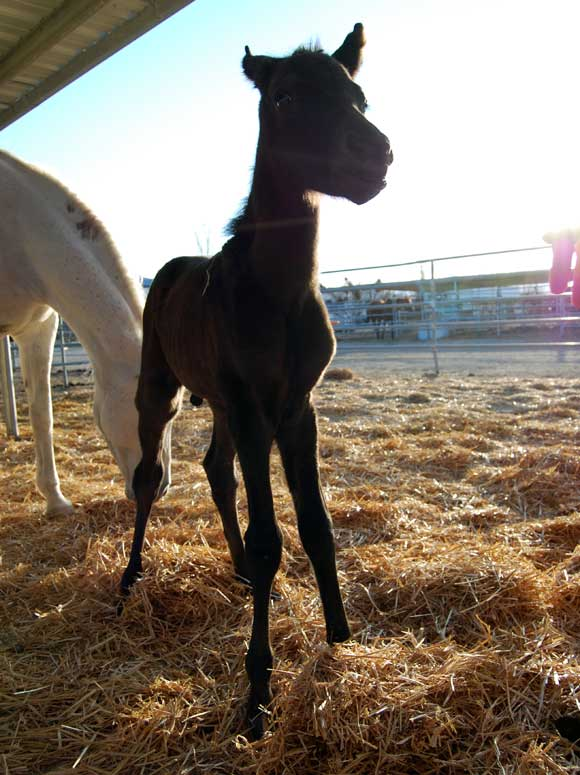 horse-foal-ranch.jpg