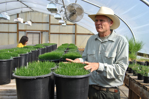 kenneth hignight grass seed Seed For Yourself: A Visit to the Grass Seed Capital of the World