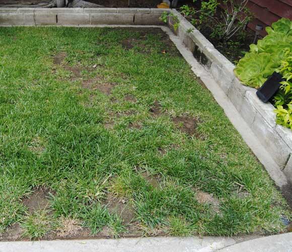 lawn-before.jpg