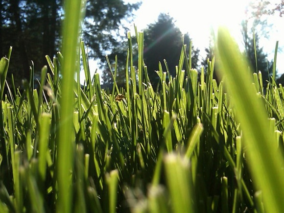 le grass Expert Tips On Starting A Lawn