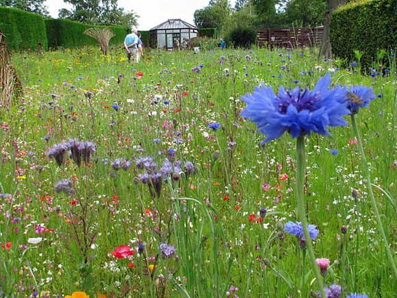meadow vs lawn Five Steps to Your Own Backyard Meadow