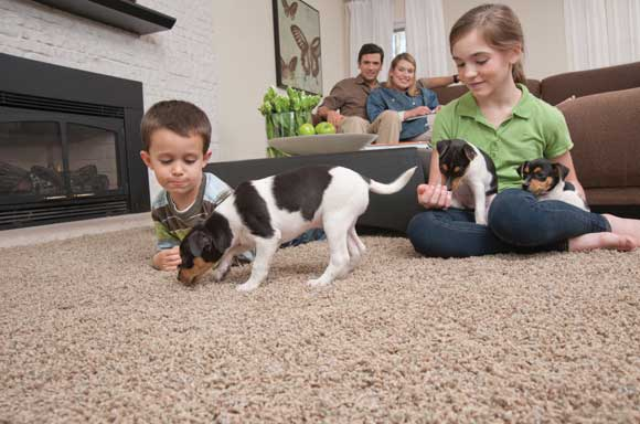 mohawk smartstrand petfriendly Mohawk Flooring Thats Good for the Earth and Your Pets
