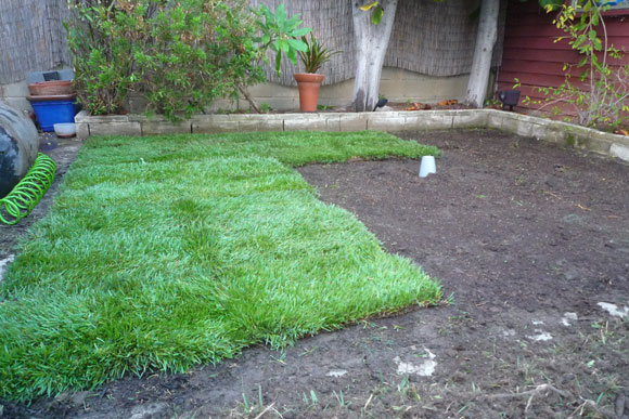 How to Lay Sod Grass In Time for Spring