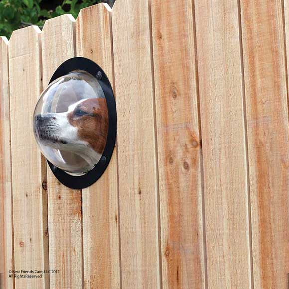 Pet Peek Fence Portal: A Window for Your Dog