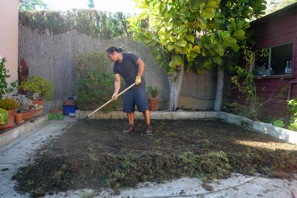 raking How to Lay Sod Grass In Time for Spring