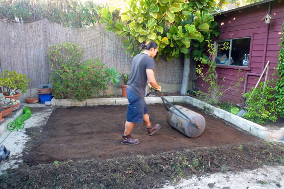 roller How to Lay Sod Grass In Time for Spring