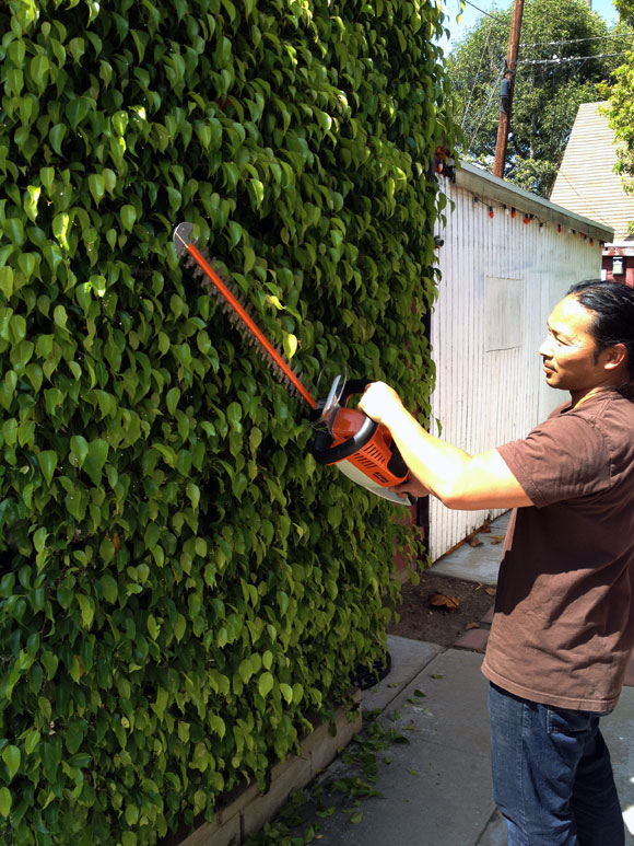 STIHL HSA 65 Cordless Hedge Trimmer Review