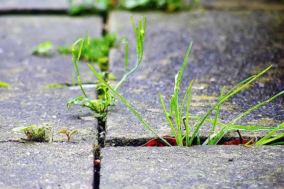 weed-killers-nontoxic.jpg