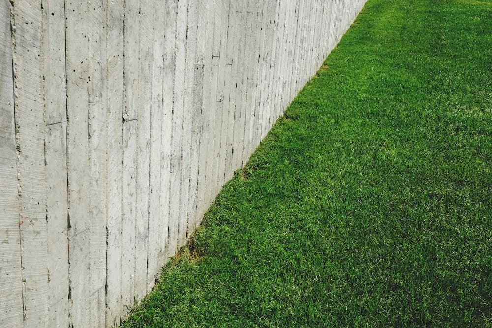 From Fescue to St  Augustine, Which Lawn Grass is Best for You?