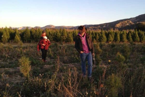 How to Choose a Christmas Tree Farm