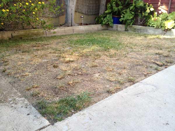 dry-lawn