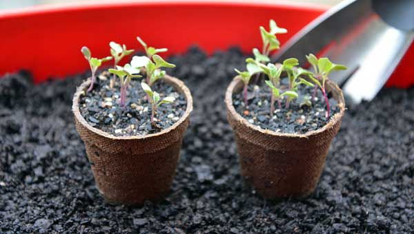 winter-gardening-sprouts
