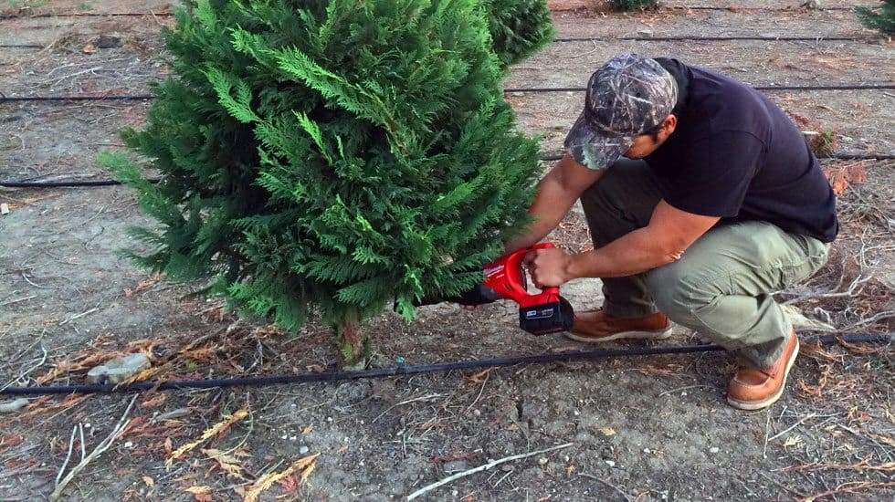 cutting your christmas tree sawzall featured