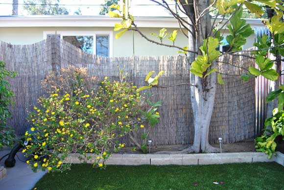 privacy-fence-before