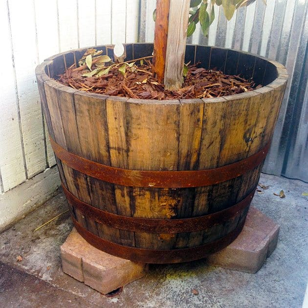 whiskey-barrel-planter