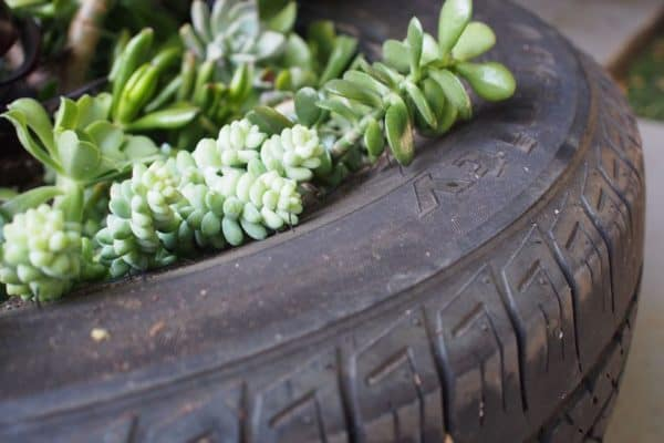 Upcycle a Used Tire into a Succulent Planter