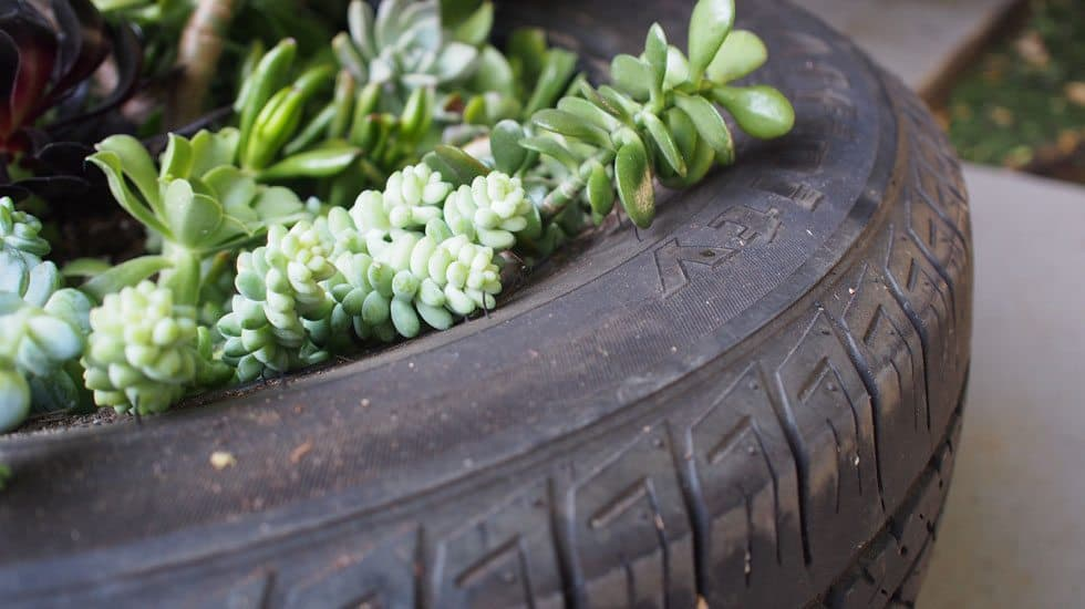 featured succulent tire