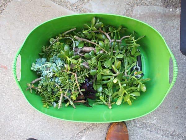 succulent-bin