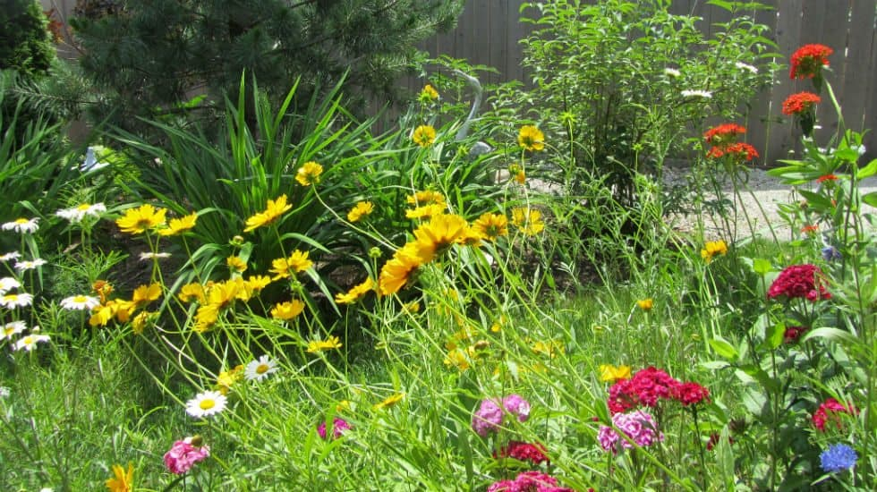 How to Convert Your Lawn to Drought-Tolerant Native Plants