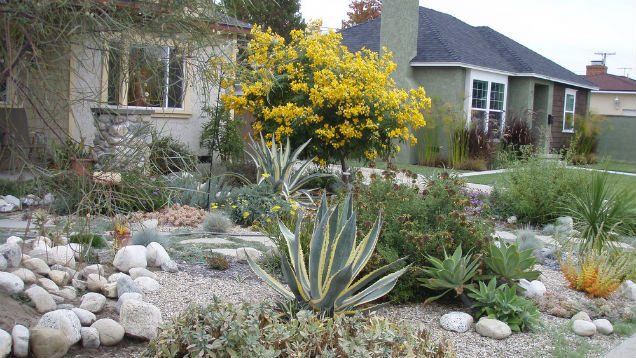How to Convert Your Lawn to Drought Tolerant Native Plants
