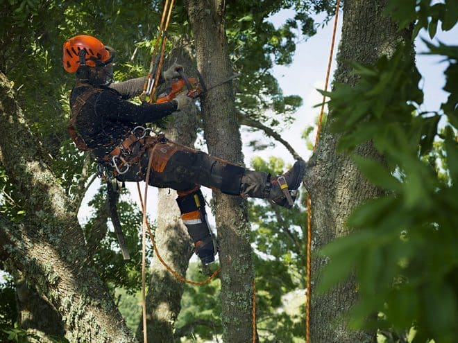Arborist working with battery top handle chainsaw T536Li XP