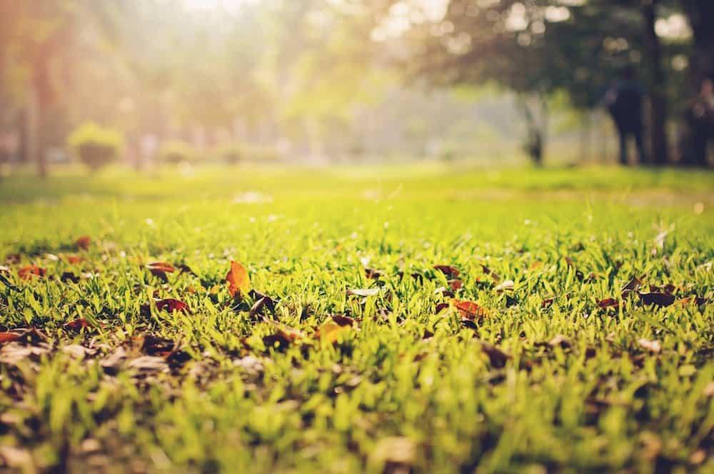 frost lawn
