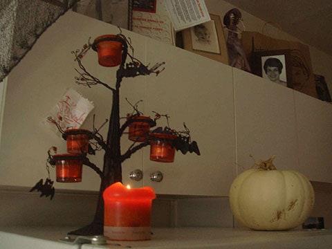 matthew gray gubler kitchen