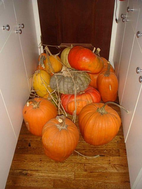 matthew gray gubler pumpkins